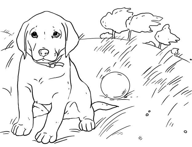 Изображения Раскраски Собаки Чихуахуа / tonpix.ru